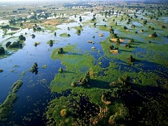 Aerial view of Okavango Delta's permanent floodplains, Botswana